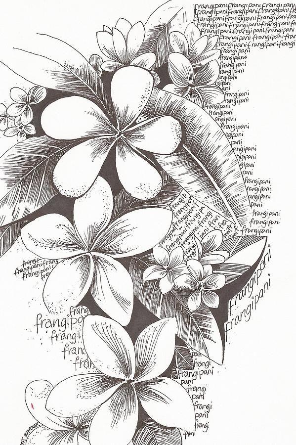 Frangipani Flowers By Pat Barker Hawaiian Flower Drawing
