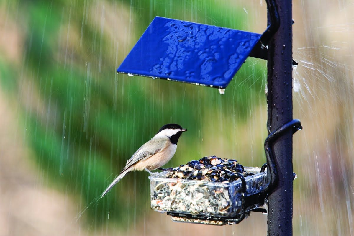 Bird In The Rain Wild Birds Unlimited Wild Birds Rain Wallpapers