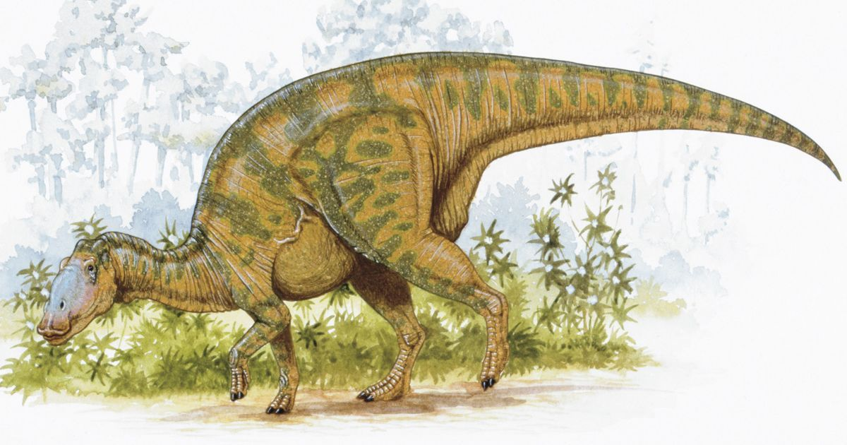 Planteating dinosaur ate pine needles and ignored