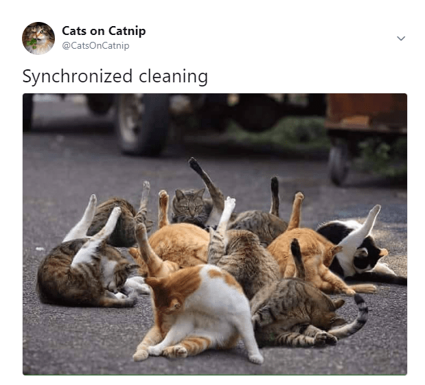 They Should Take it To The Olympics Funny cats, Funny