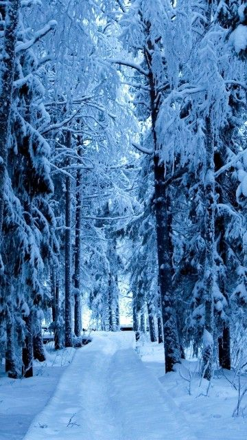 Snow Forest Blue Ice Android Wallpaper Thumbnail In 2019
