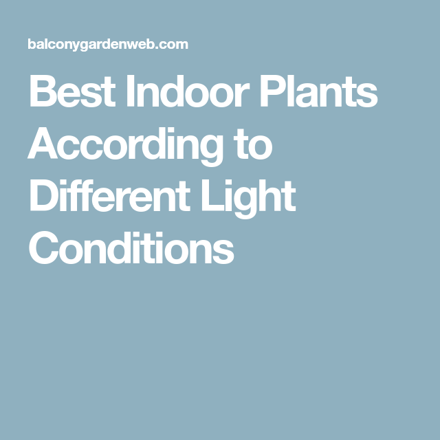 Best Indoor Plants According To Different Light Conditions 400 x 300