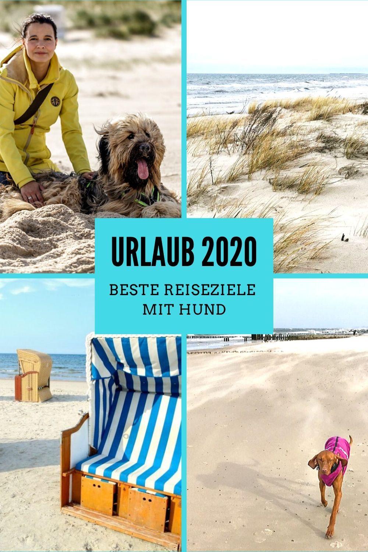 Hundeurlaub Die 15 Schonsten Reiseziele Mit Hund 2020 Travel On Toast In 2020 Reiseziele Urlaub Mit Hund Nordsee Urlaub Mit Hund