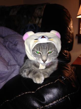 Little Sparrow Rose Wearing A Teddy Bear Hat Not Pleased Cat