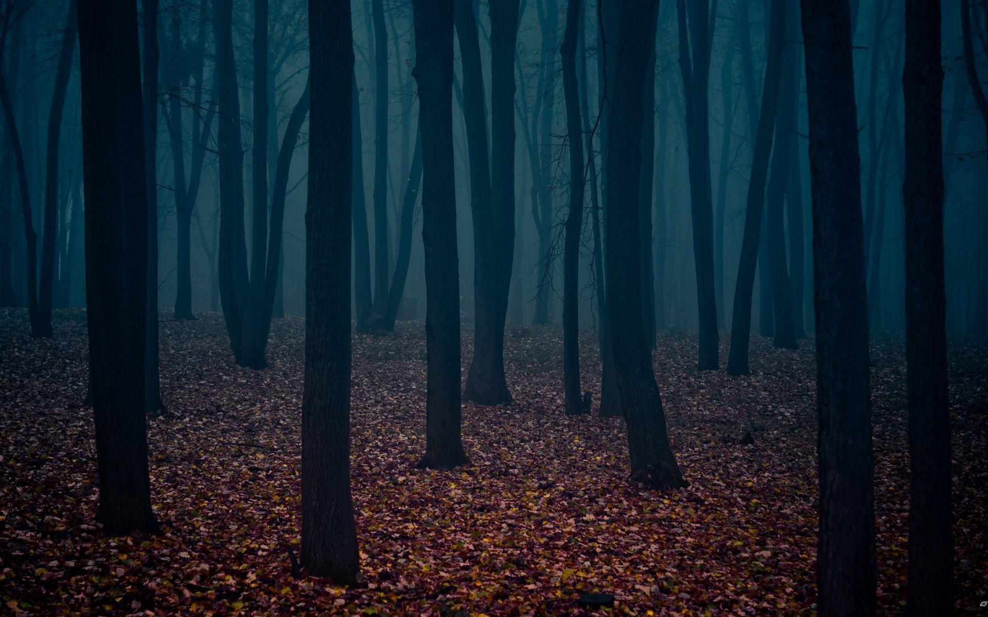Dark Forest Wallpaper Widescreen Ya1 Earth