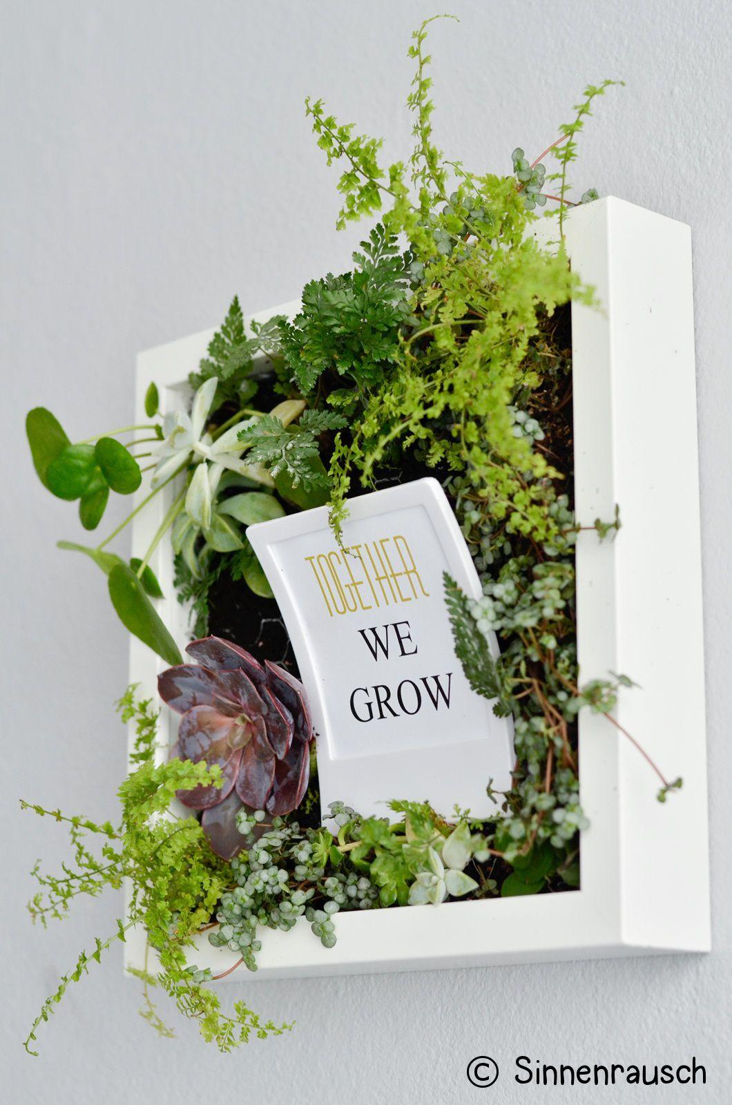 fotogruesse diy bepflanzter bilderrahmen. Black Bedroom Furniture Sets. Home Design Ideas