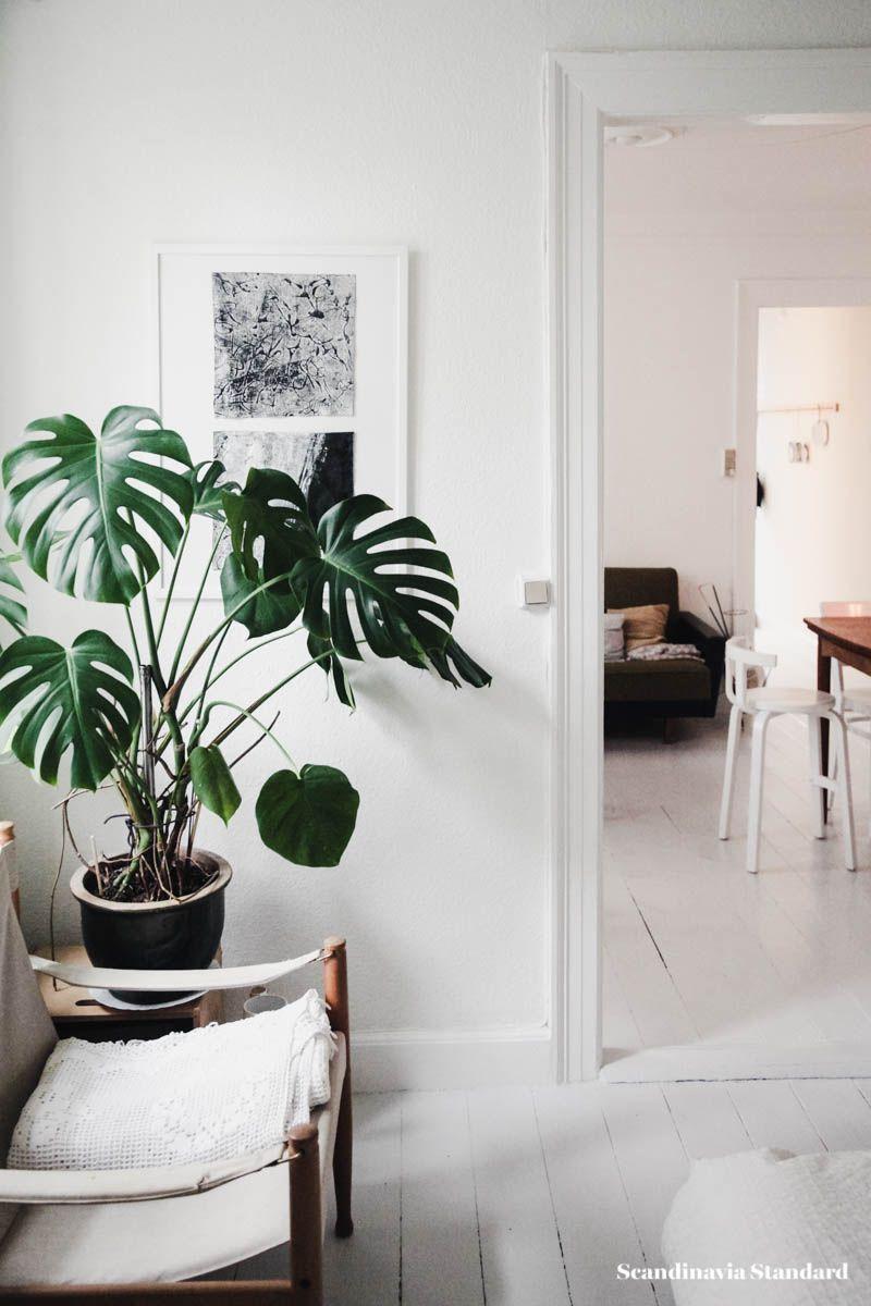 The White Room Sissel Matt S Vanlose Apartment Desk Plants Living Room Plants Low Light Plants