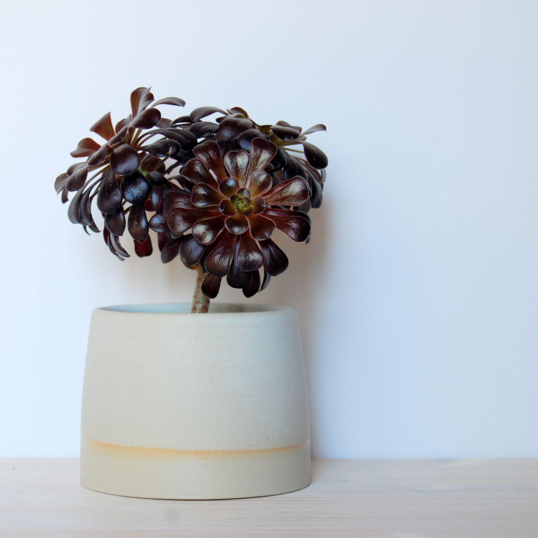 simple plant pot