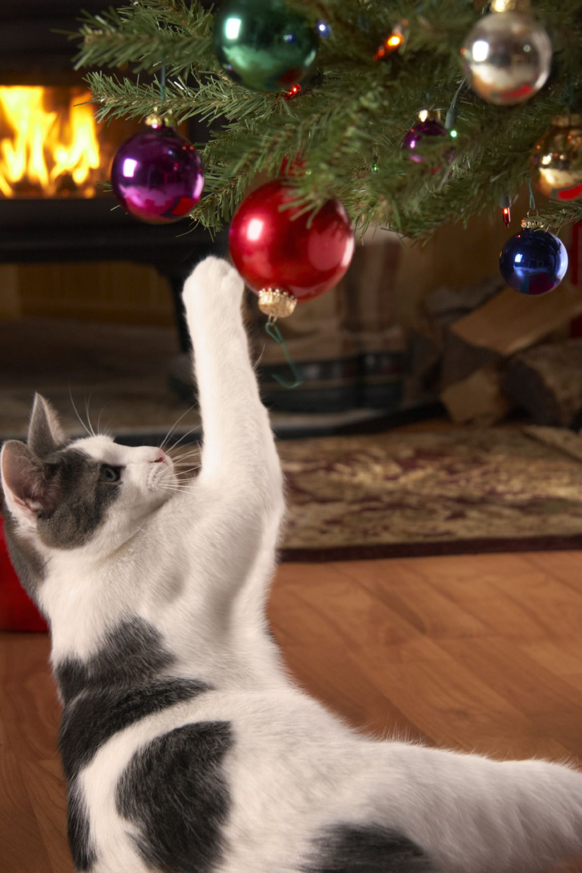 tips to keep your cat off the christmas tree you 39 ve just picked out a sturdy balsam fir that. Black Bedroom Furniture Sets. Home Design Ideas