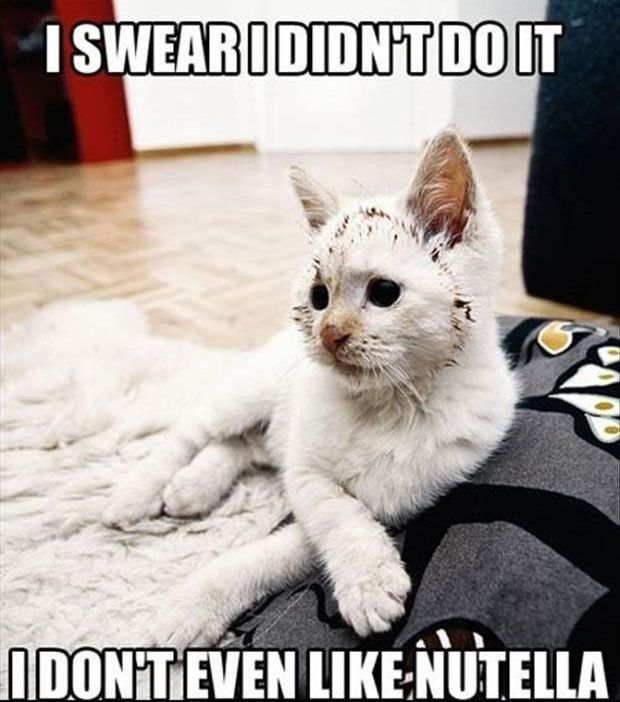 Funny Cat Pictures With Captions 19 Pictures Caption Gallery