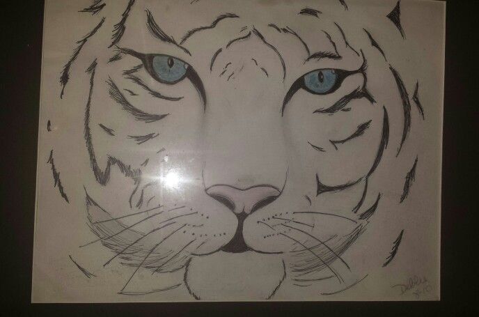 Line Drawing Of A Tiger S Face : Siberia tiger drawing drawings and