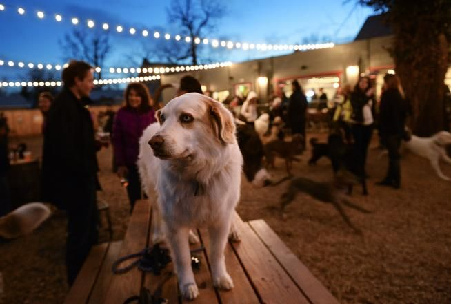 Denver Restaurants And Bars Can Allow Dogs On Patios Under New