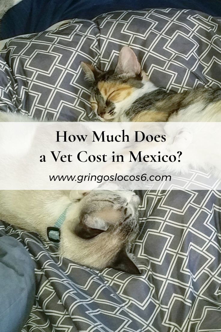 How Much Does a Vet Cost in Mexico? Find out now! Vet