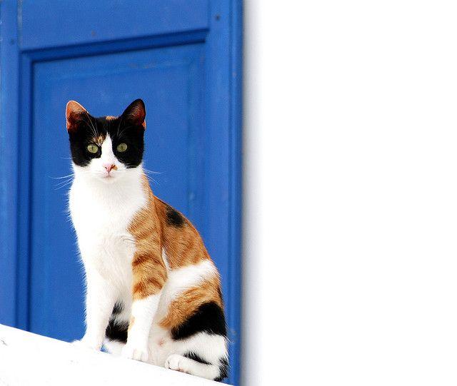 Cat and the blue shutter, Mykonos, Photo credit John Carnessiotis