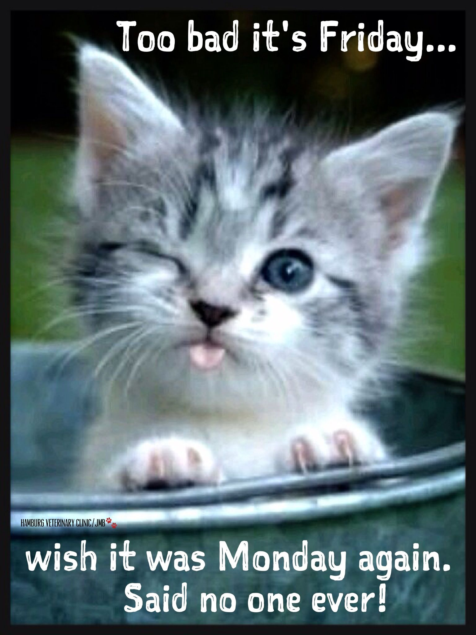 friday funny animal humor cute cat too bad its
