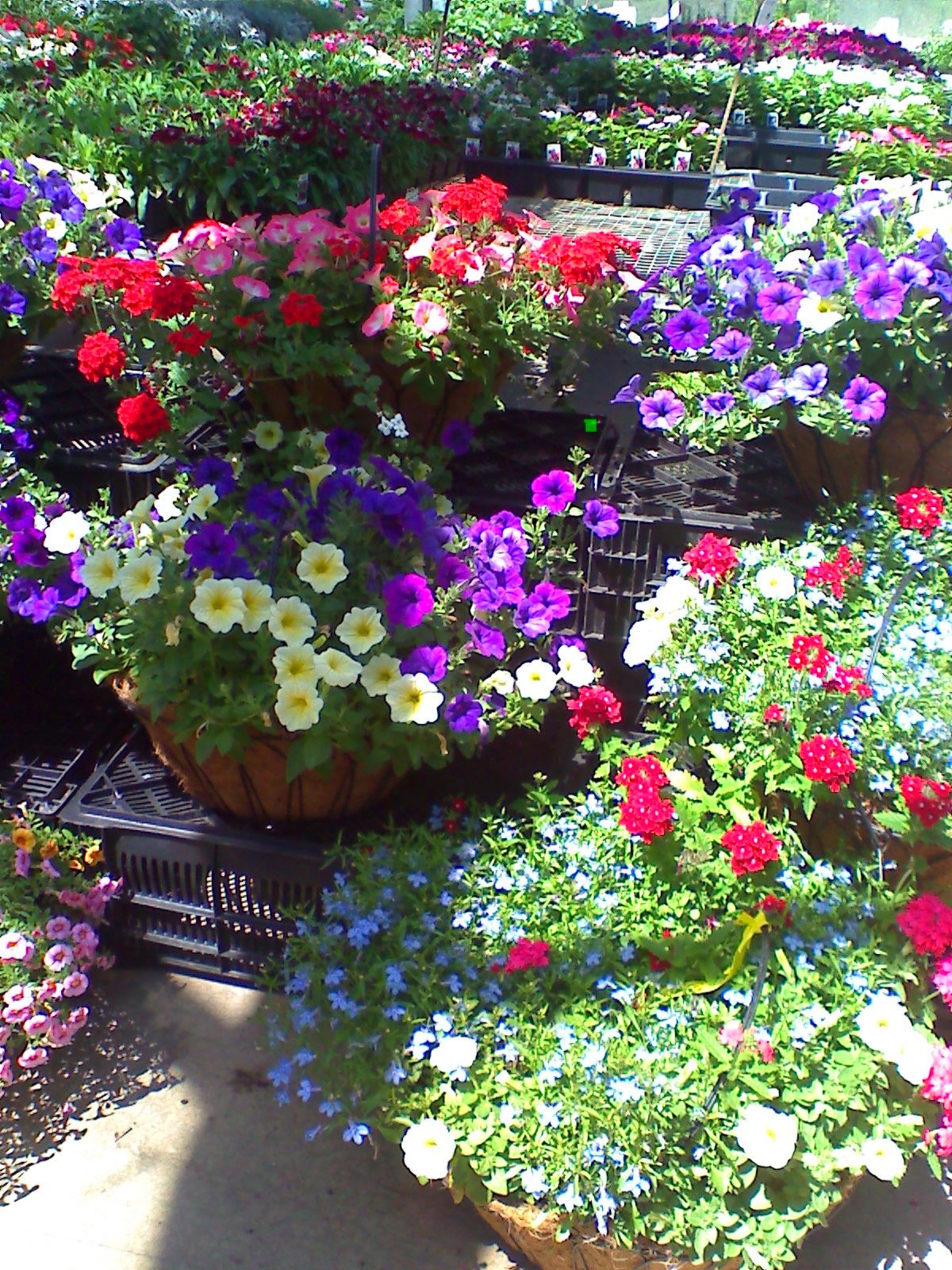 Great basket combinations Container gardening, Spring