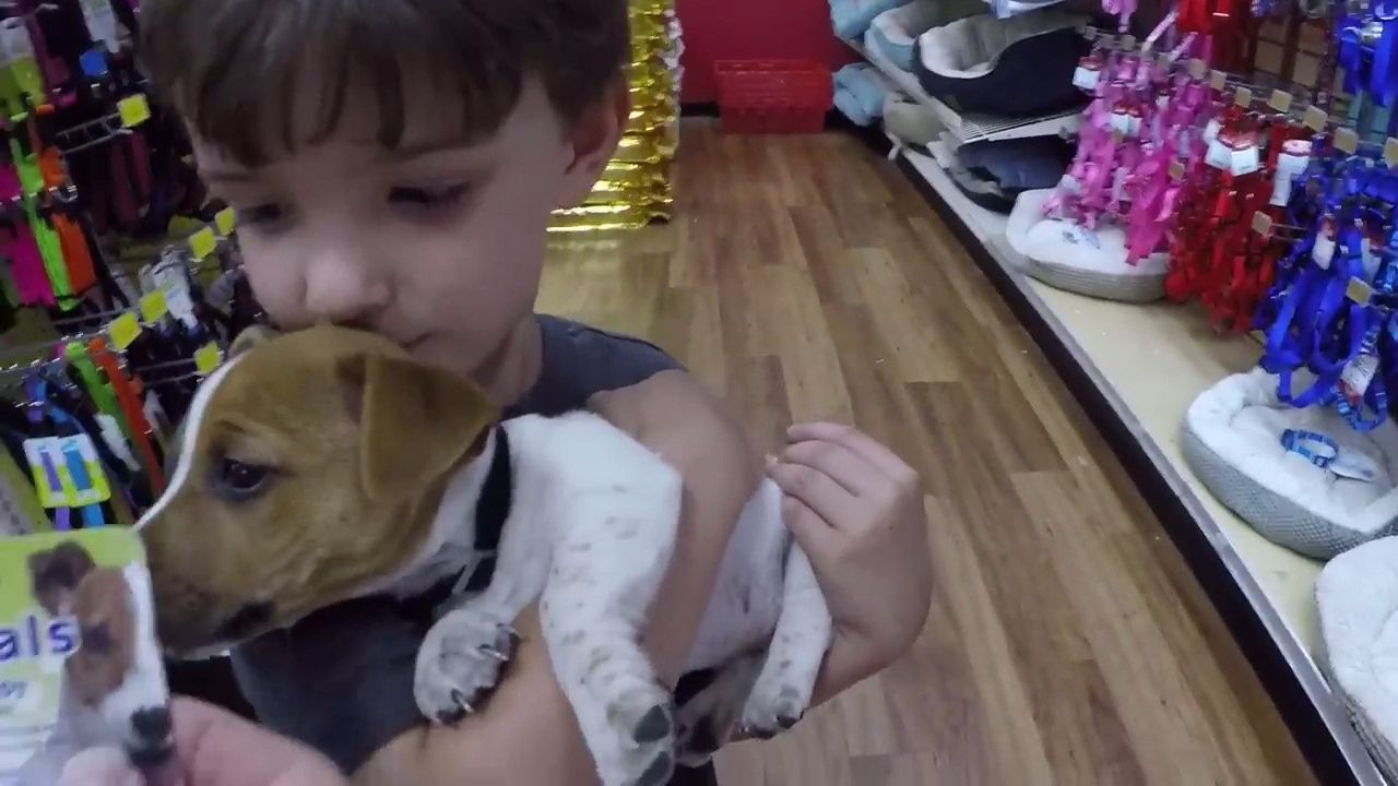 Cute Puppy Jack Russell Maxx Goes Shopping Youtube Jack
