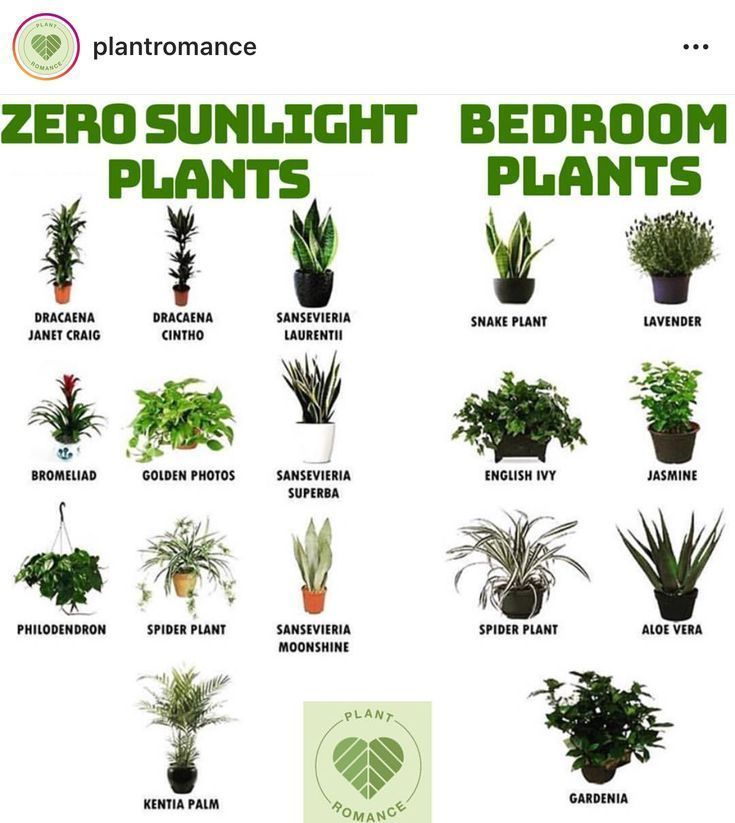 Christmas style !! WAKE UP! Plants that can grow in the house during the colder ... #gartenideen