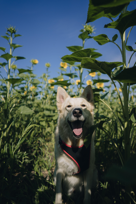 Sony, Alpha a7, D4C5B2 Dogs, Dog images, Free dog photos