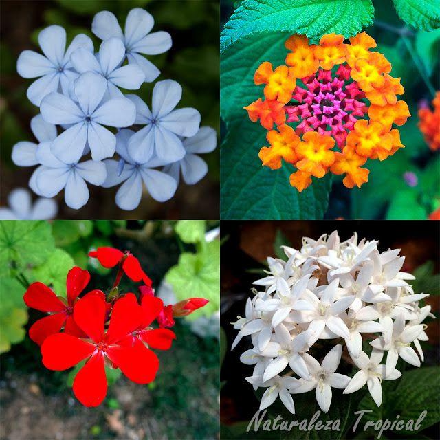 Plantas con floraciones abundantes durante todo el a o y for Plantas para el jardin todo el ano