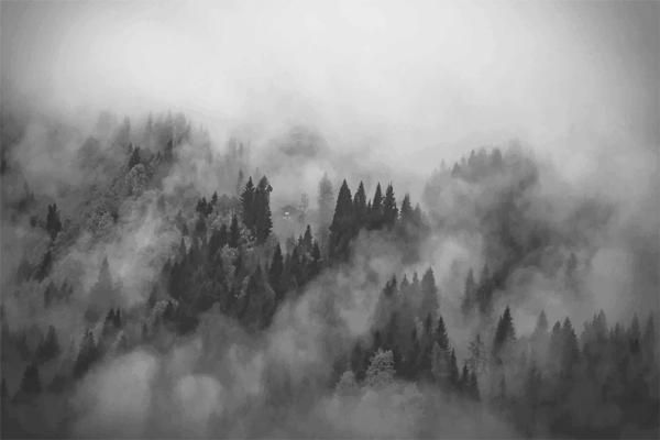 Foggy Hills Mural Foggy Forest Forest Wallpaper