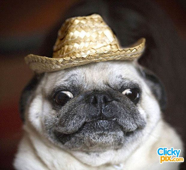 Dogs Wearing Hats 34 Cute Pictures Dog Pictures New York Dog Cute Dogs