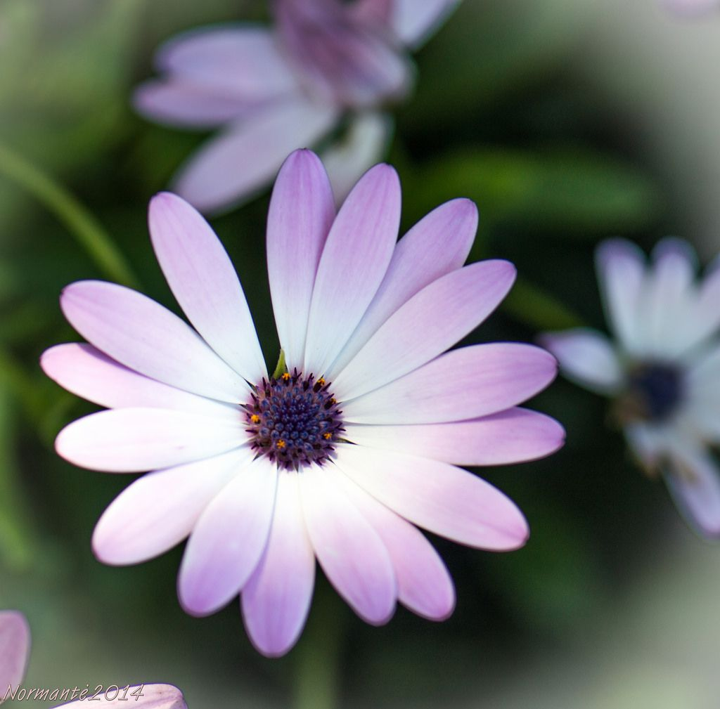 Top 163 Most Beautiful Popular Different Types Of Flowers For Your