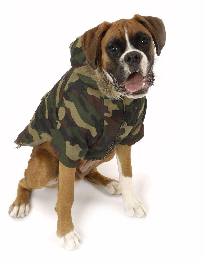 Nosy Dog Parka in Camouflage Dog parka, Dog coats, Dog