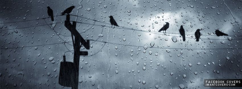 Birds On A Wire Rain Wallpapers Inspirational Quotes Pictures How To Memorize Things