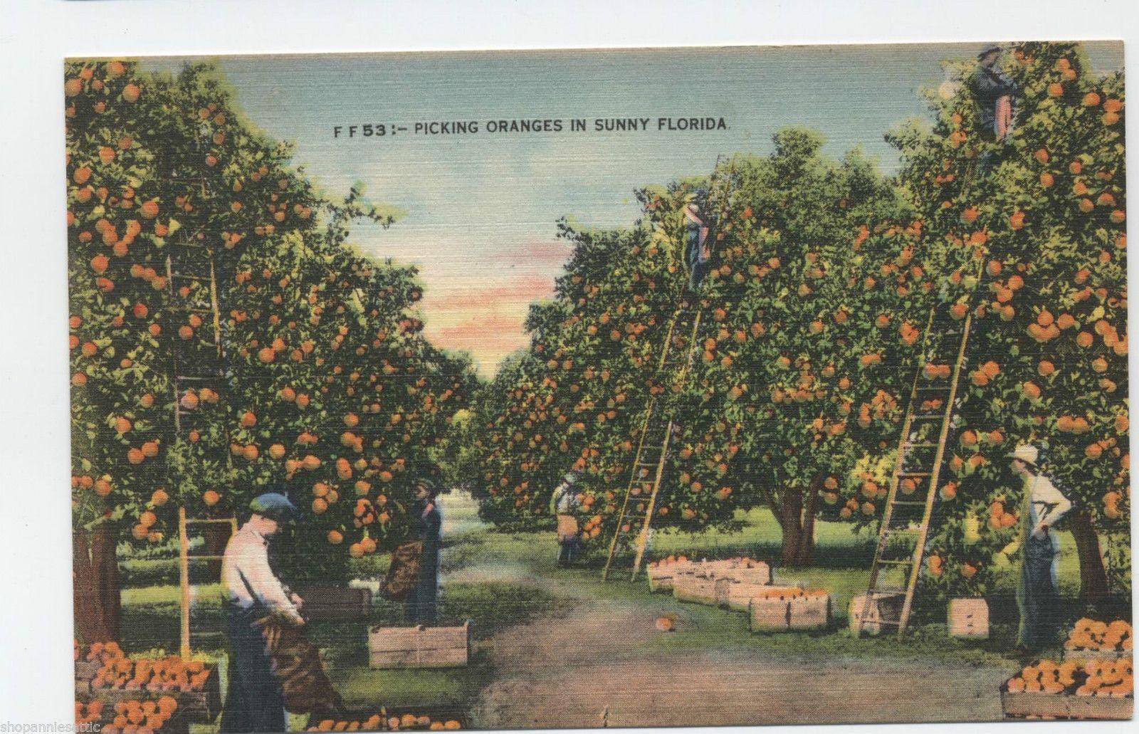 Vtg Pc Postcard Florida Picking Oranges Orange Grove Workers Wood Crates 1940 039 S Ebay Rio Grande Valley Texas Postcard Rio Grande Valley