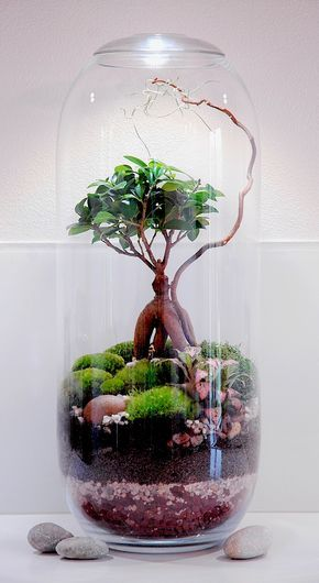 Comment faire un terrarium humide en 8 étapes Terraria and Plants