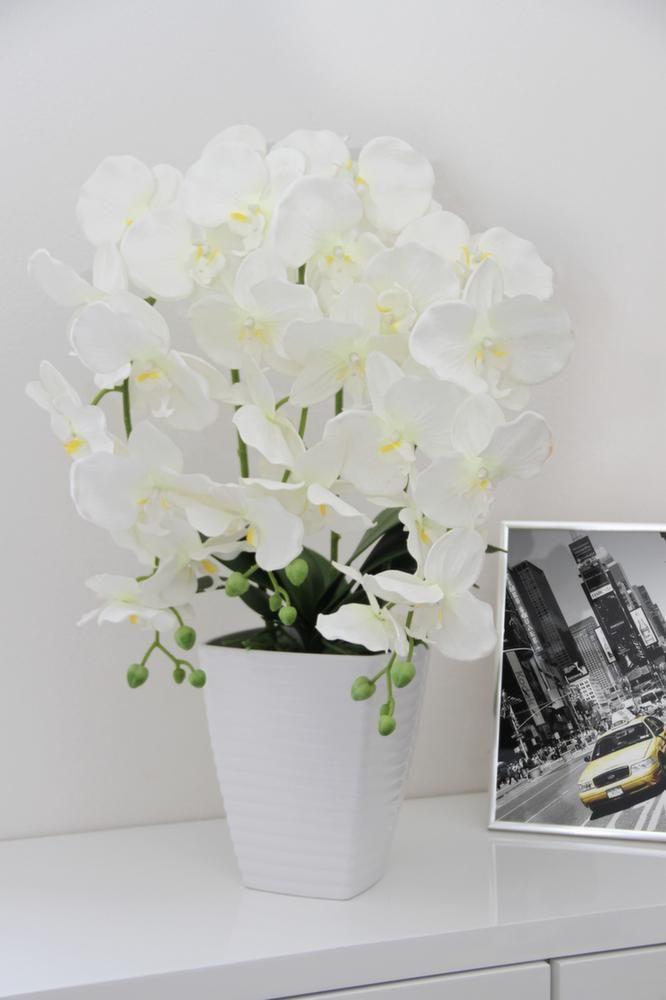 44+ Orchidee d exterieur en pot ideas in 2021