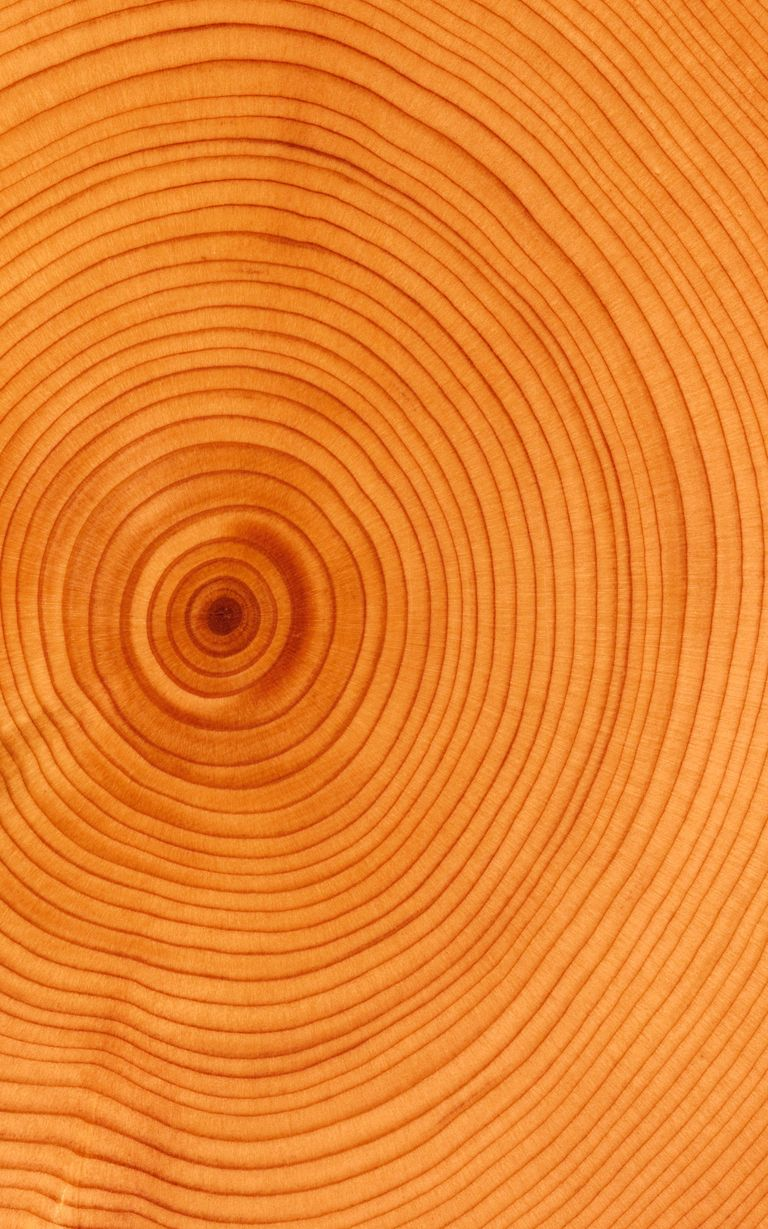 tree ring dating dendrochronology