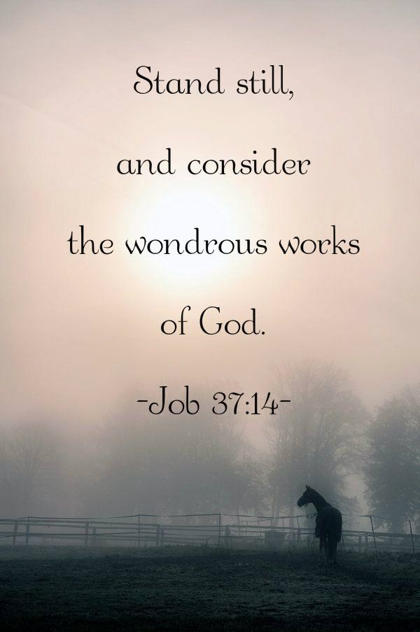 Job 37 14 With Images Scripture Quotes Scripture