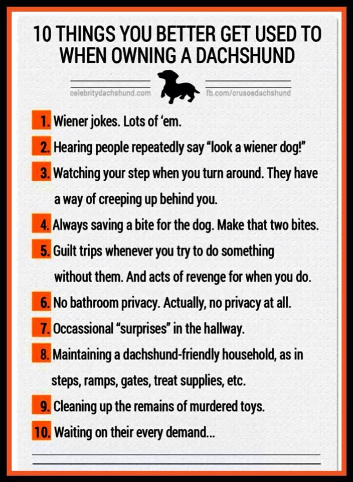 Pin by Mandy Froese on Wiener Dogs Dachshund, Wiener dog