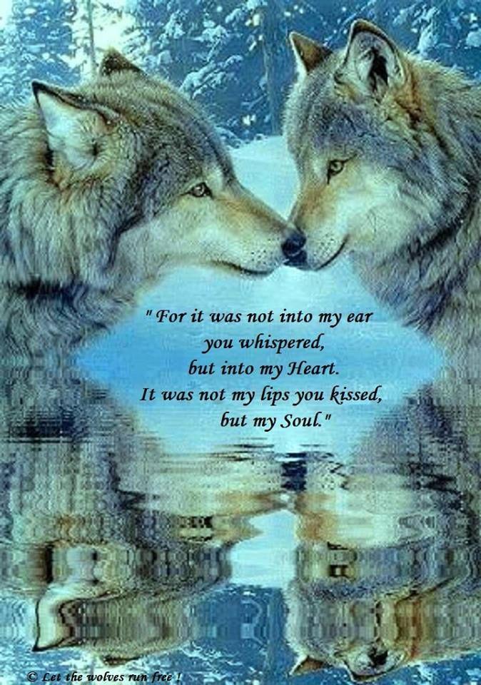 Wolf Love Quotes Wolf Love quotes | wolf | Wolf, Wolf quotes, Wolf love Wolf Love Quotes