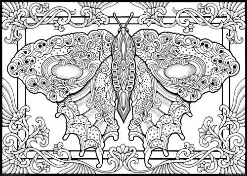 Butterfly Beauty Color By Number Coloring Butterfly