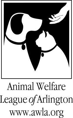 Local Animal Shelter Animal Shelter Animal Welfare League Cat Shelter