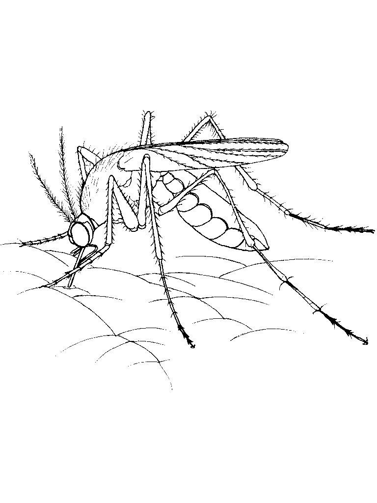 Free Printable Mosquito Coloring Pages For Kids Insect Coloring