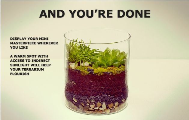 How To Make Your Own Terrarium Diy Ikea Terrarium Terrarium