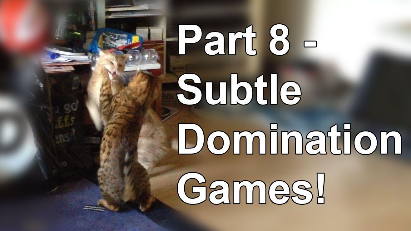 Bengal cat behaviour Subtle changes Part 8 Cat
