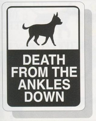 Beware of Chihuahua!