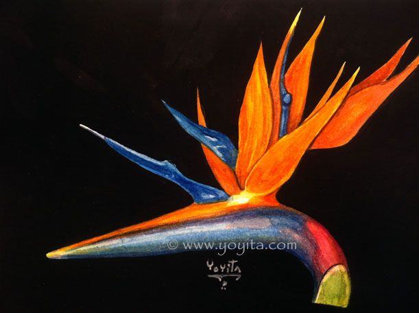 bird of paradise flower watercolor by yoyita strelitzia reginae bird of paradise crane flower. Black Bedroom Furniture Sets. Home Design Ideas