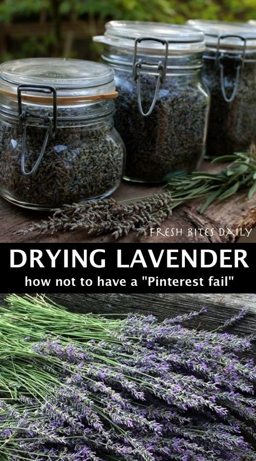 to Dry Lavender How to dry lavender without becoming a Pinterest How to dry lavender without becoming a Pinterest Instructions on how to propagate lavender from cuttings...