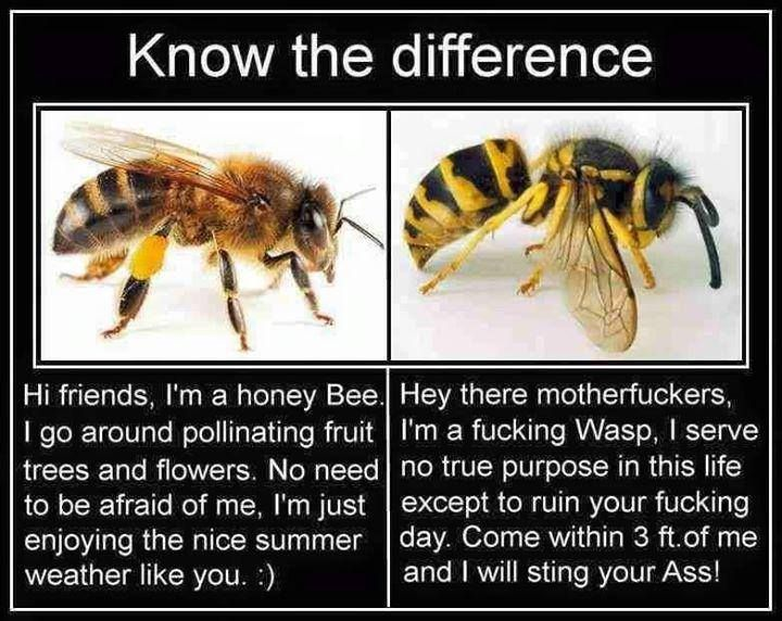Bee vs wasp Life, love, and laughter Pinterest Wasp, Humor