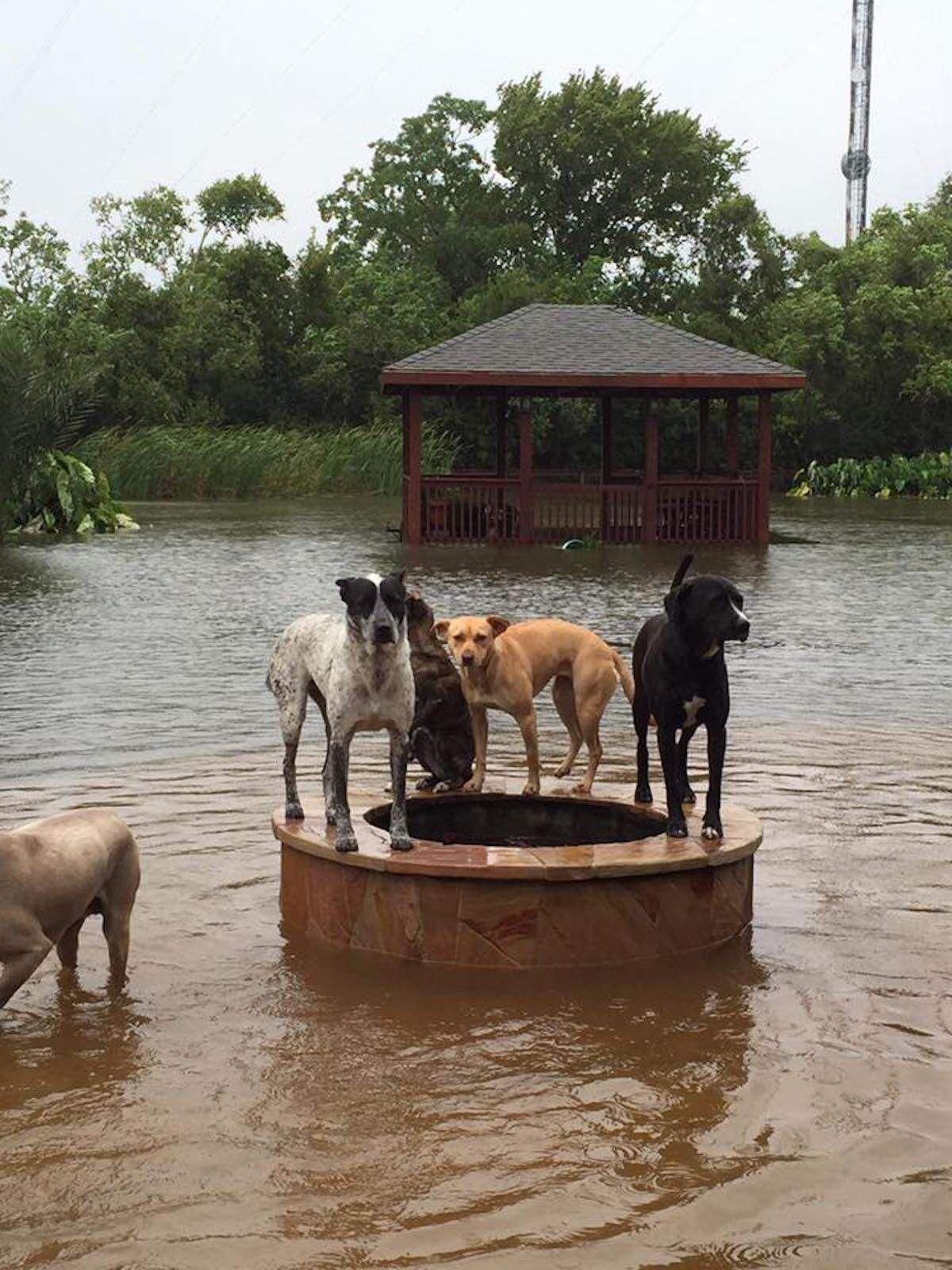 14++ Harveys hope animal rescue ideas in 2021