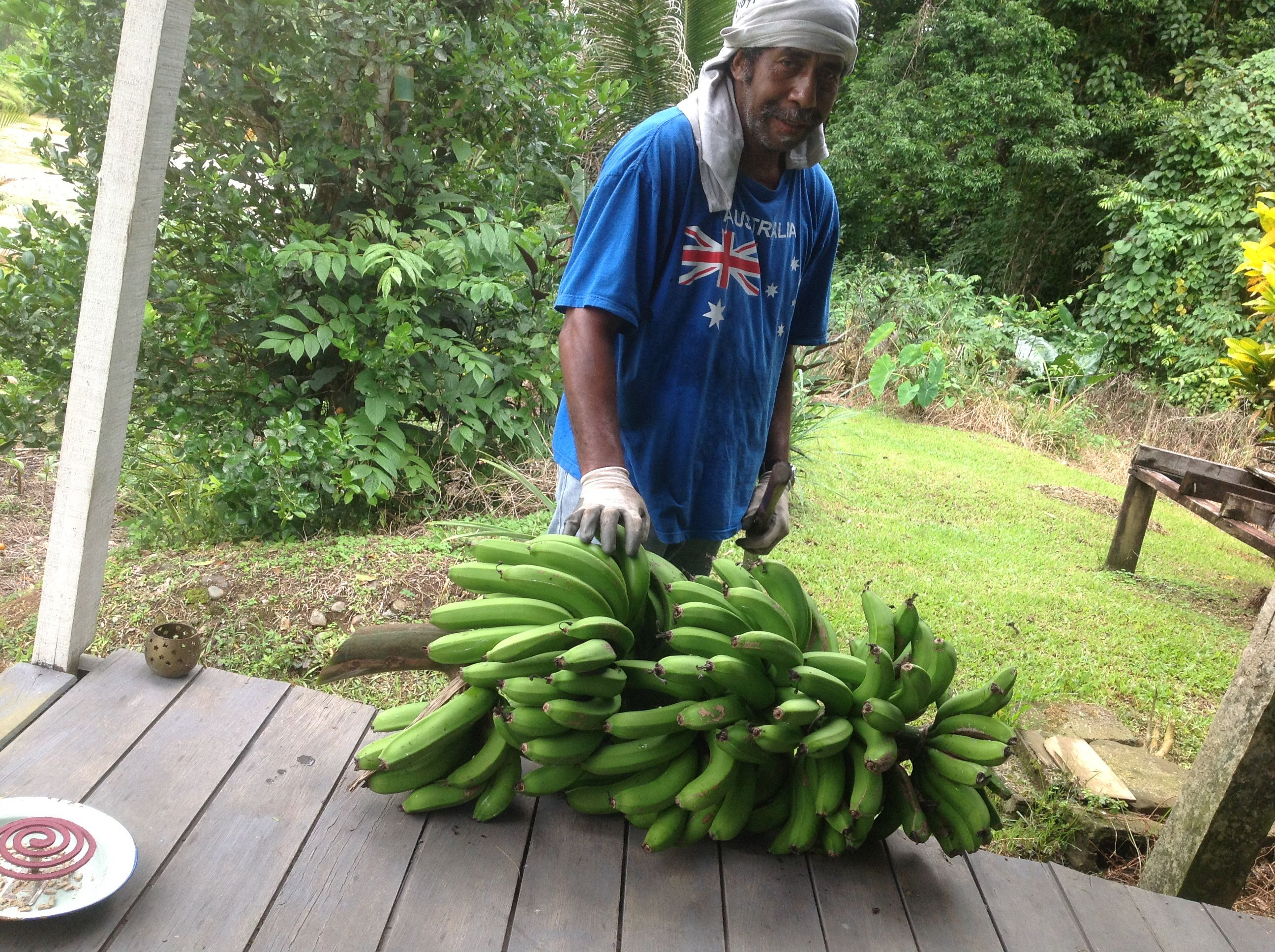 Banana crop.