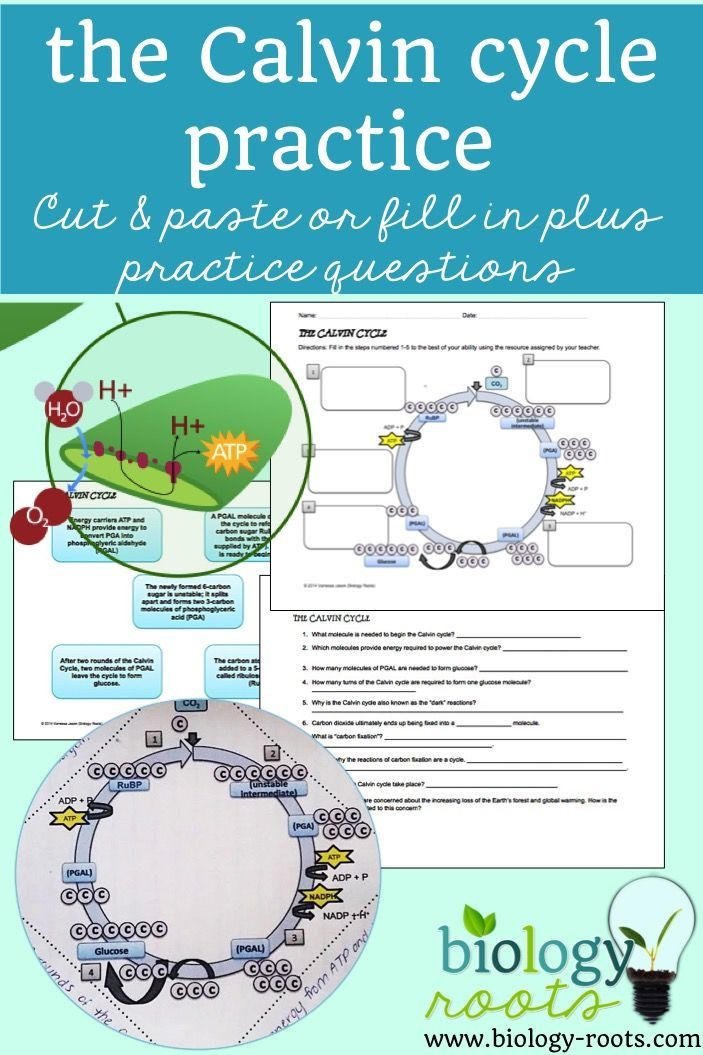 Photosynthesis Light Independent Reactions Calvin Cycle
