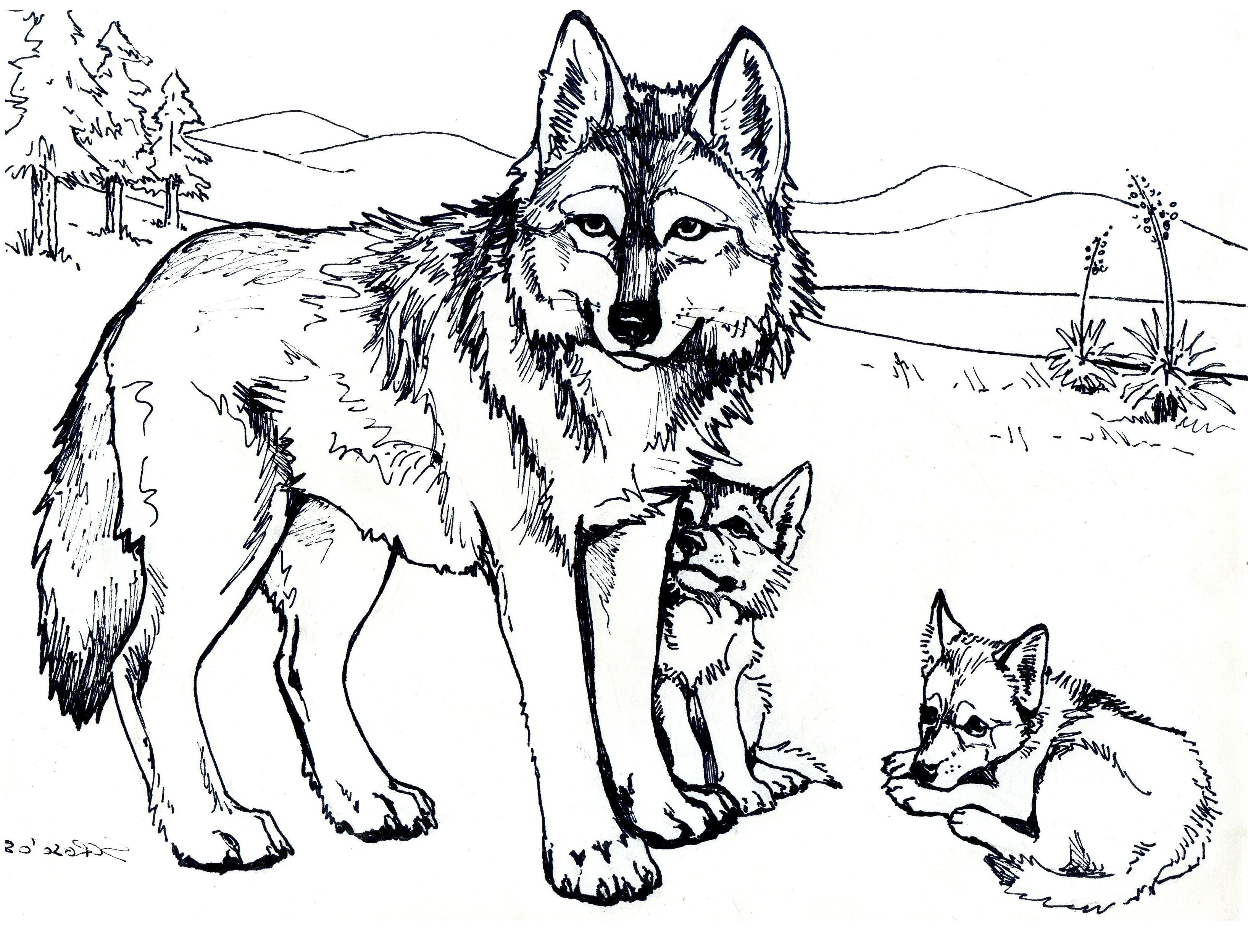 Wolf Coloring Pages Images Pictures