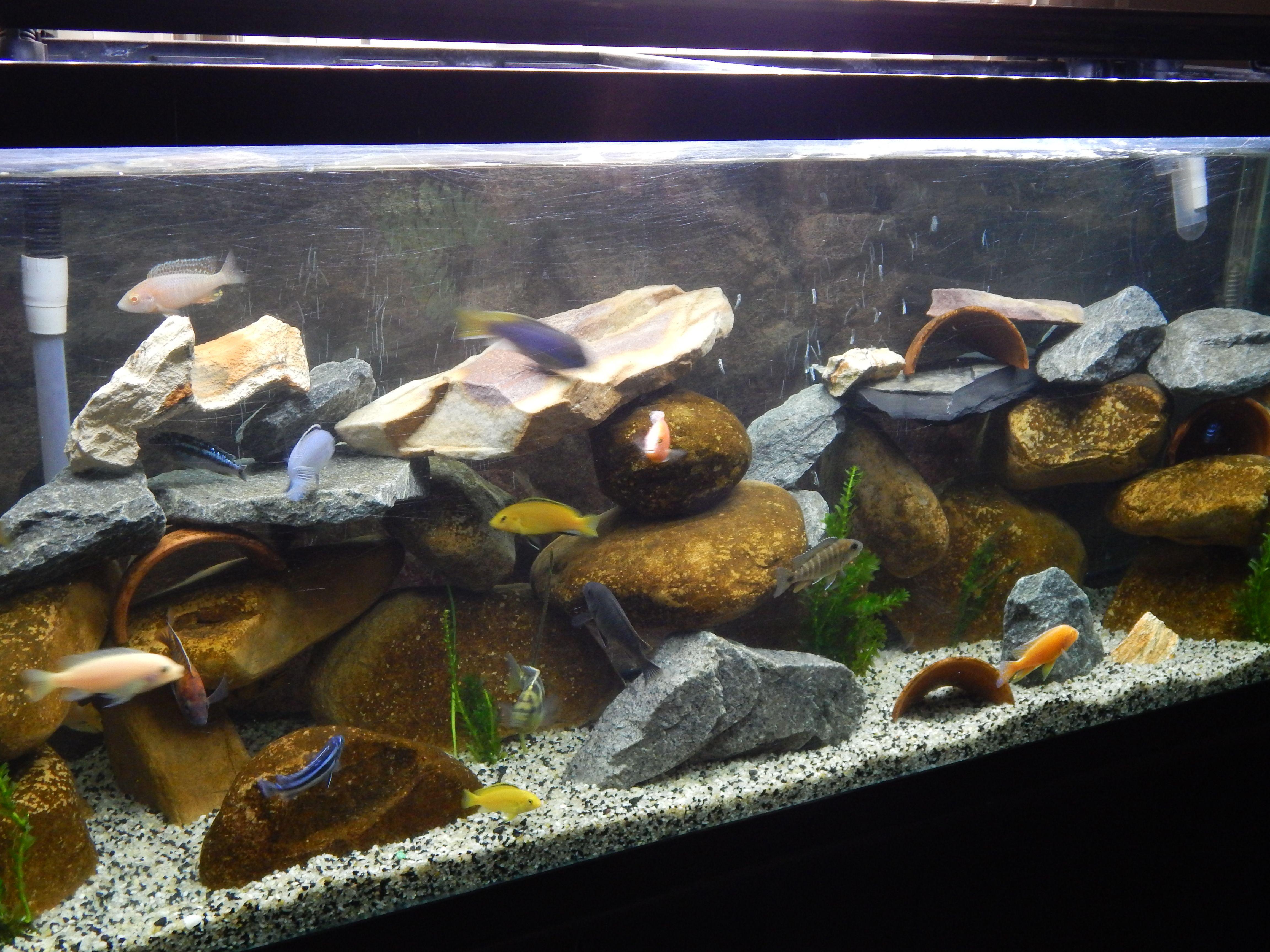 091a132e7149e7e48d6fd17f63353325 Frais De Jbl Aquarium Conception